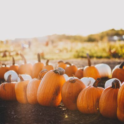 The Top Places to go Pumpkin Picking in Essex